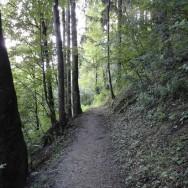 bled-bosque