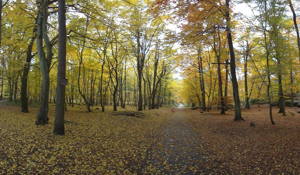 Fontainebleau-bosque