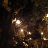 Bar el Bosque de Las Hadas