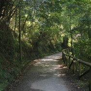 Camino de la Senda del oso Asturias